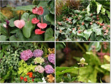 38 Tropical Flowers Garden Wallpapers