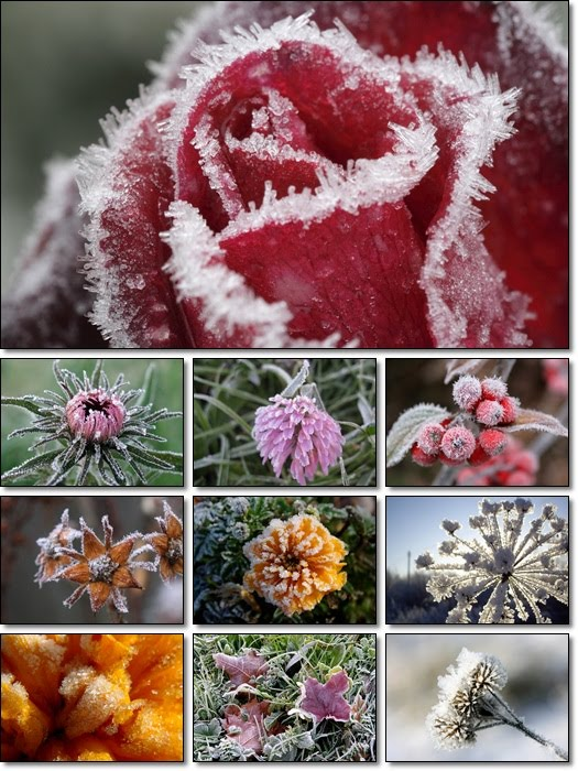 Plants in Hoarfrost Wallpapers Pack