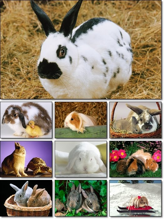 Rabbits 1600x1200 Wallpapers Pack