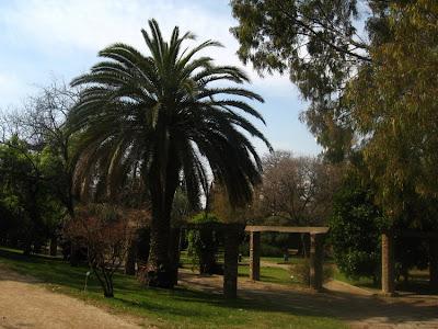 Palm trees everywhere... :)