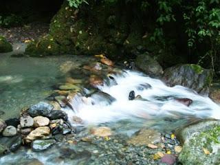 Parque Nacional Guaramacal. Venezuela con su río y vegetación