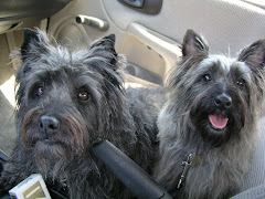 Louie and Maggie, Cairn Terriers