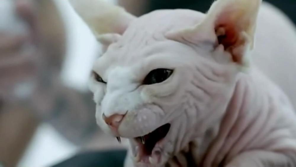 halloween cat make up ideas