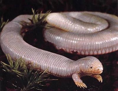makhluk pelik seperti ular