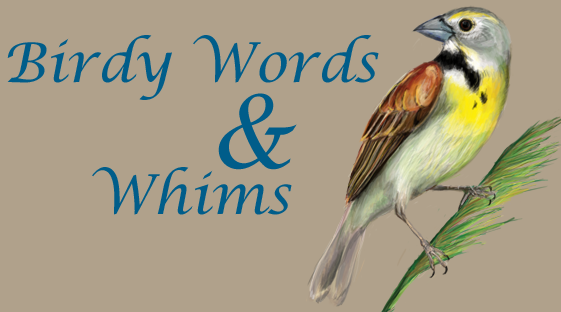 birdy words & whims