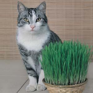 Somos Loucos Por Gatos Voc Conhece Catnip