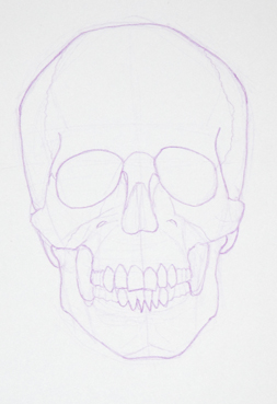 Paint Draw Paint, Learn to Draw: Drawing Basics: Anatomy of the Skull