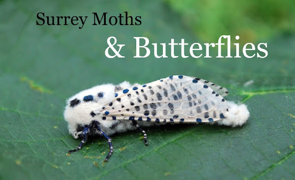 Surrey Moths & Butterflies