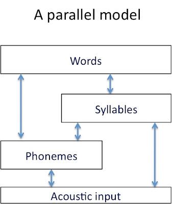 Talking Brains Phonemic Segmentation In Speech Perception Whats