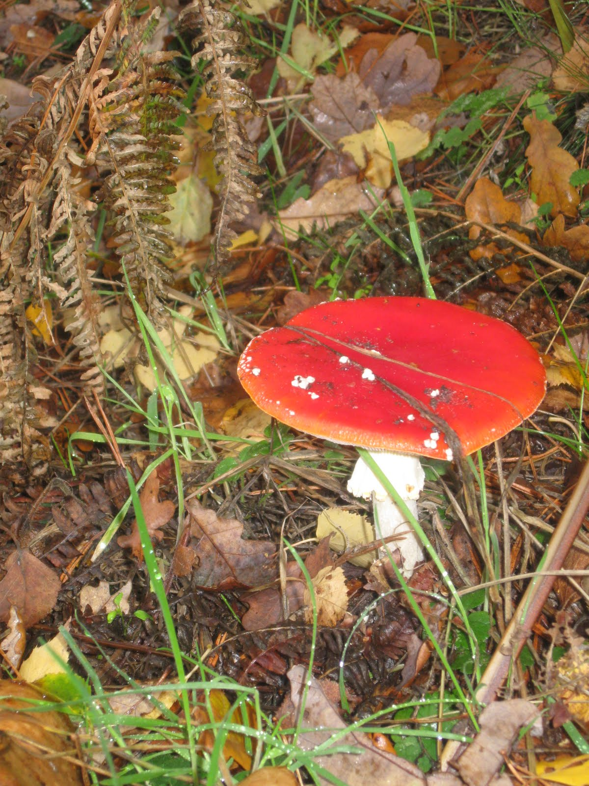 Identify Poisonous Mushrooms Images - Reverse Search