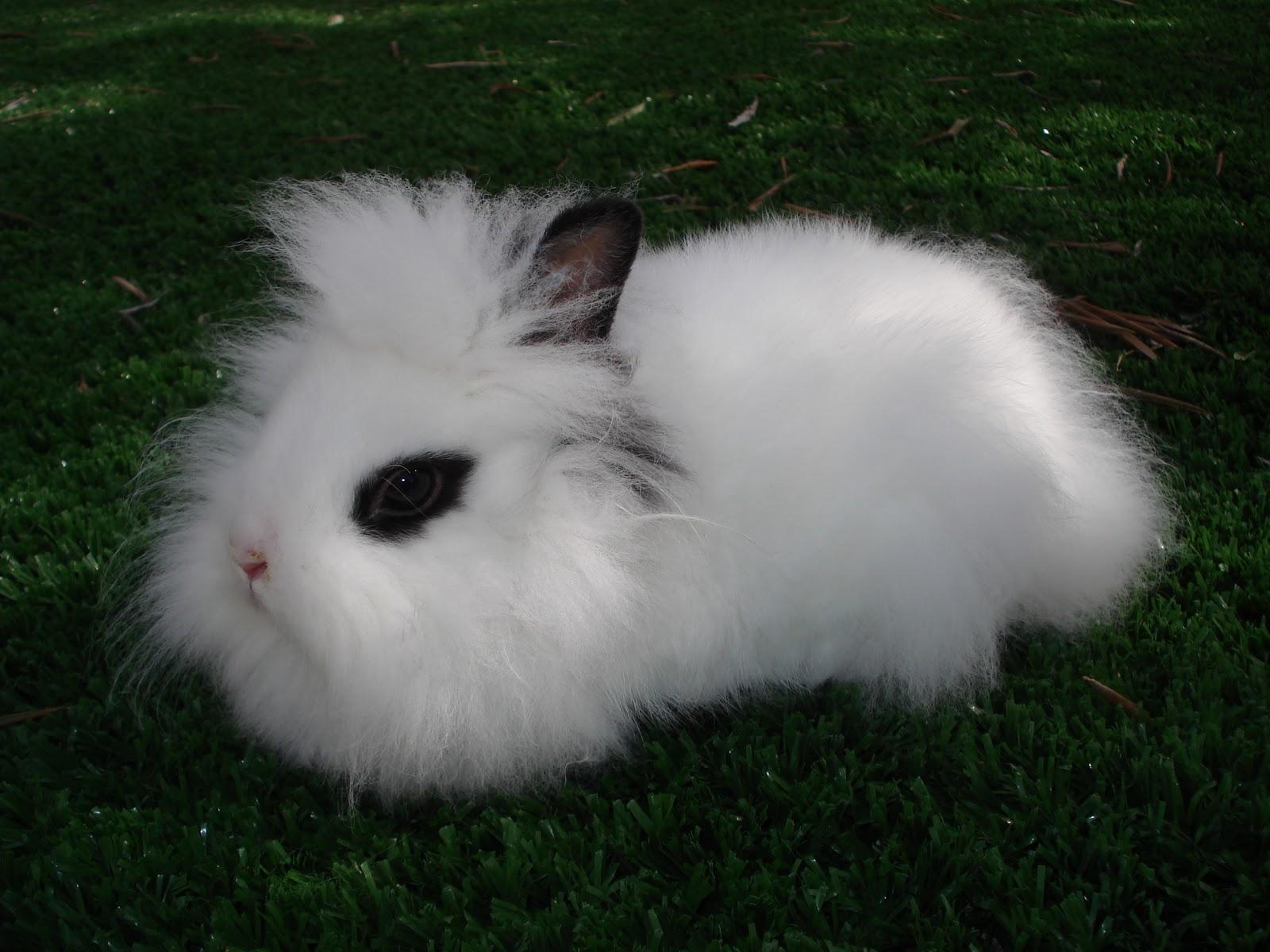 Il coniglio nano cani company - Lettiera coniglio nano ...