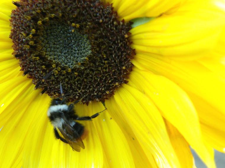 《蜜蜂很忙》,拉达克