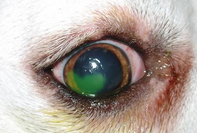 scratched cornea steroid drops