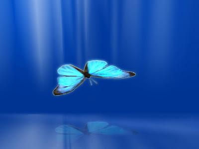 http://1.bp.blogspot.com/_CSVx-X8ytXc/S73rOFZRYEI/AAAAAAAAACk/EvUNR_aPlrA/s1600/butterfly11024.jpg