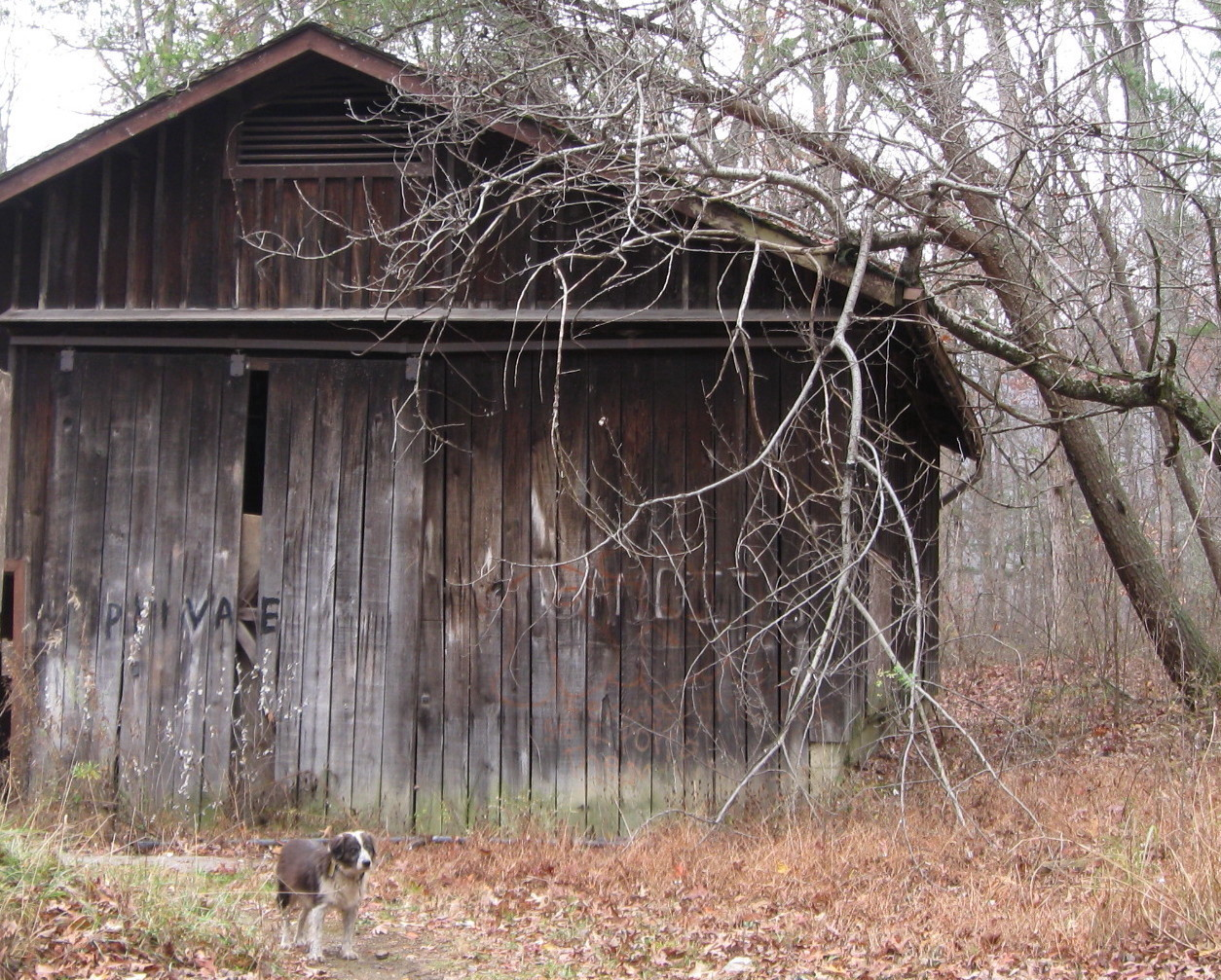 OLD DOG -- OLD BARN