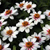 Top 10 Varieties of Blossoming Flowers for Your Garden in 2010