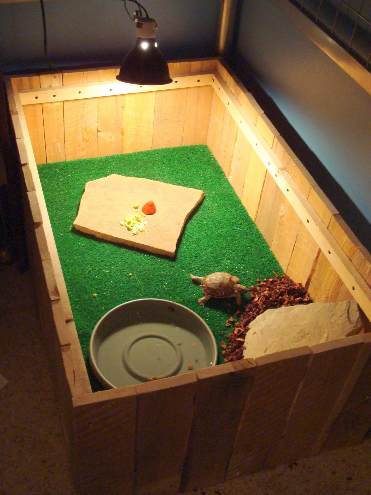 The Gallery For Box Turtle Indoor Habitat Ideas