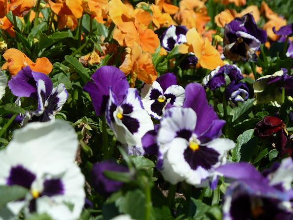 Cantero cuidar de tus plantas es - Arriate plantas ...