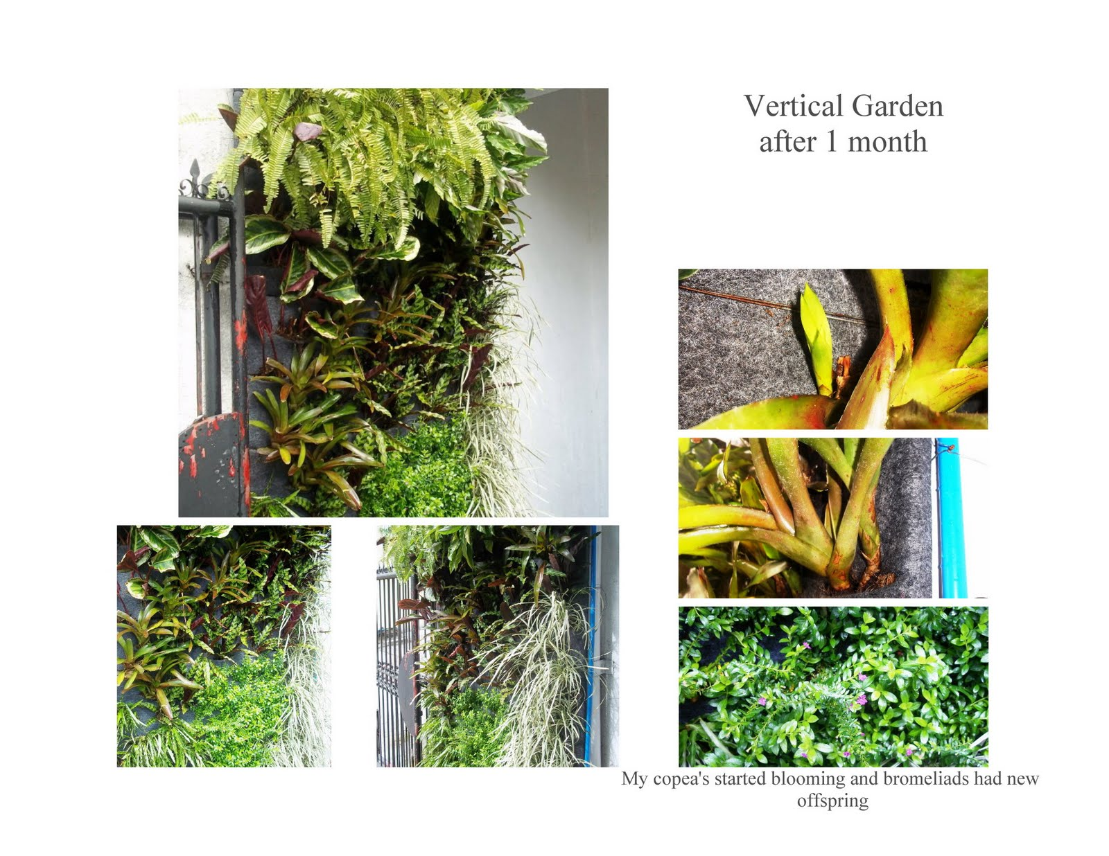 Holland Urban Gardening DIY Green Wall