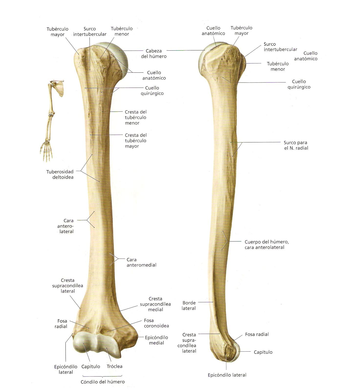 ... dar una serie de fracturas, entre ellas están las fracturas de