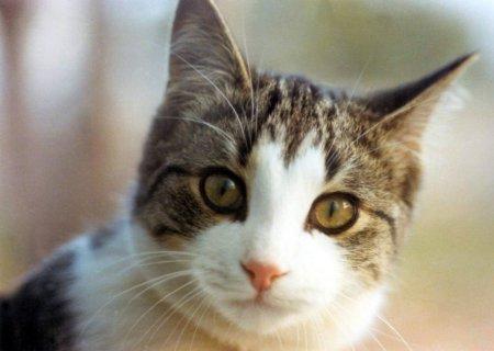 wallpaper kucing comel. Koleksi Gambar Kucing