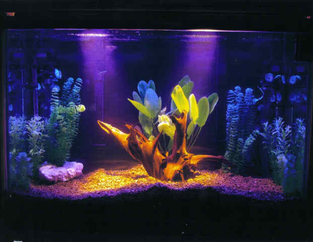 Information for your pet starting aquarium plan for How to start a saltwater fish tank