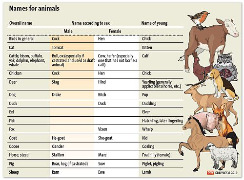 Gender animals
