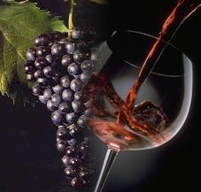 Pour l'Amour du Vino...