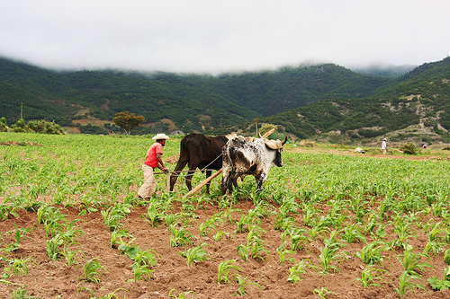 ¿Agronomía vs. agroecología?