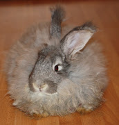 I have wanted an angora rabbit since I first learned they existed when I was .