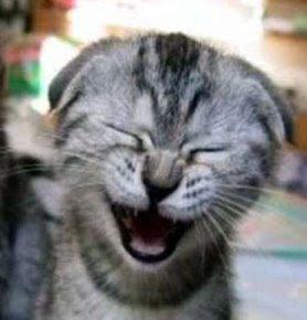 El lenguaje corporal del gato Gato_carcajada