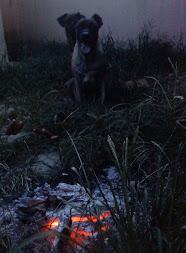 Guri e Cheetara camuflados na noite