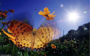 Butterflies HD Wallpapers 01 Images, Picture, Photos, Wallpapers