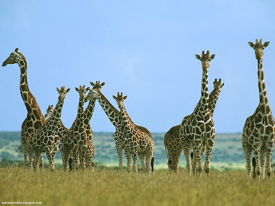 Wildlife desktop wallpapers and photos