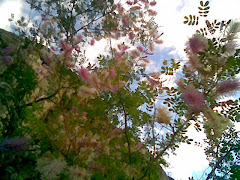 El arbusto que así florecía a la vera del camino del Cerro de la Campana.