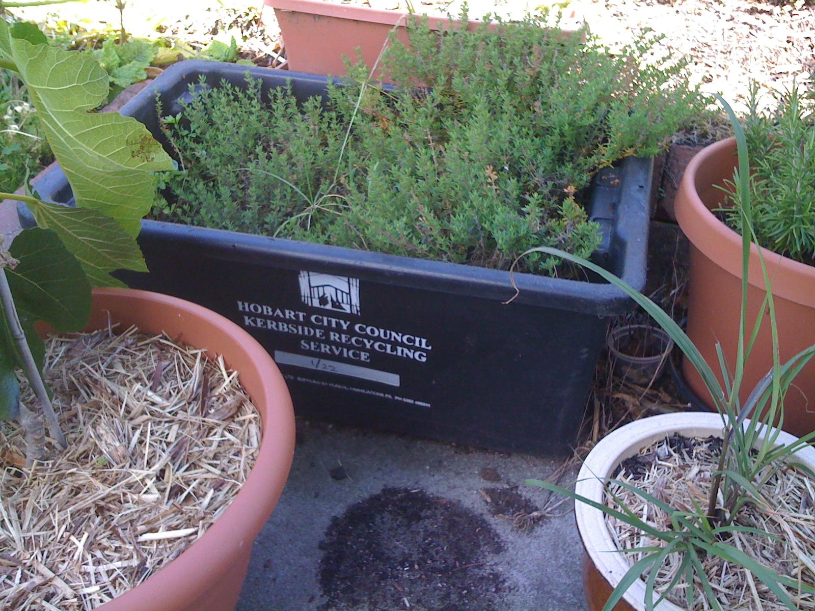 Polystyrene Garden Junkie How To Create A Polystyrene Box Garden