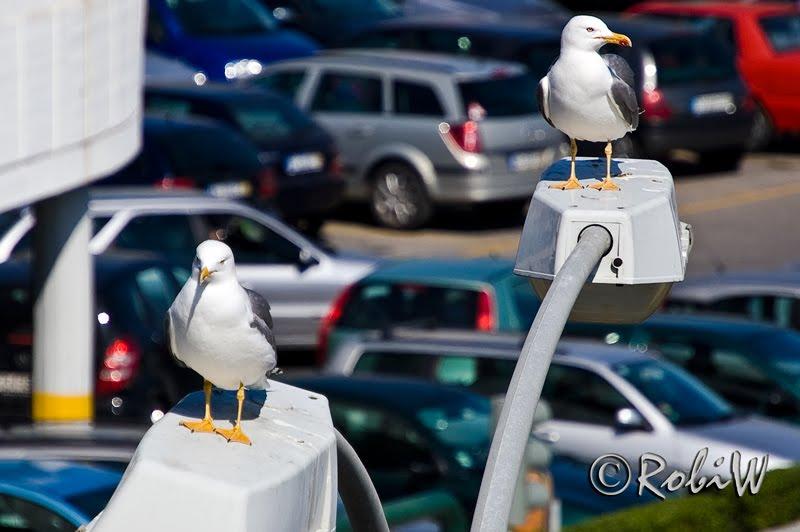 traffic agents