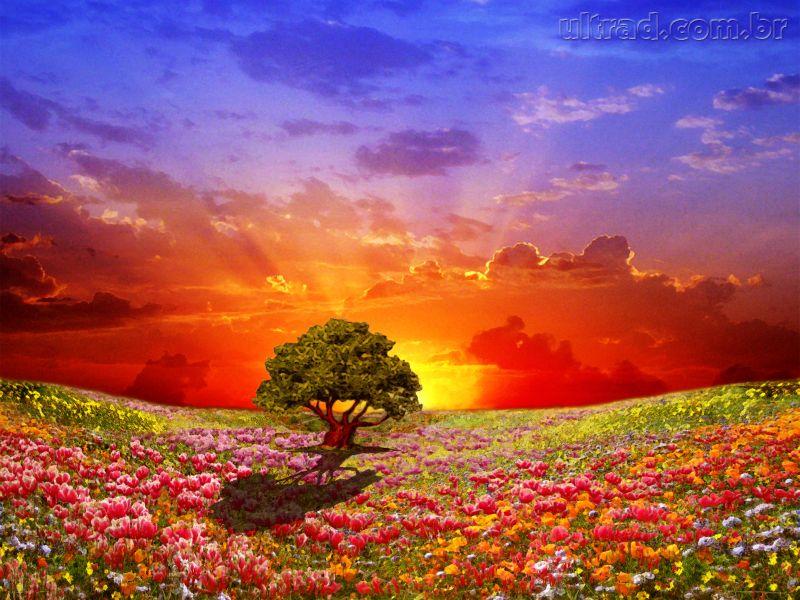 S?o as Ideias: Deserto florido