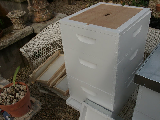 Bee hives in greenhouse