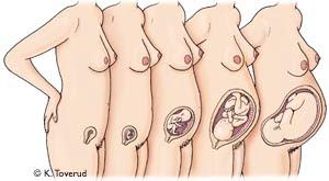 gravid uke 8 Hamar