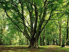 Contemplar la naturaleza nos re-conecta con lo Esencial