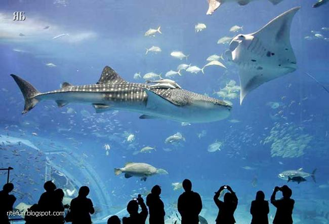 Worlds Biggest Aquarium Okinawa Churaumi