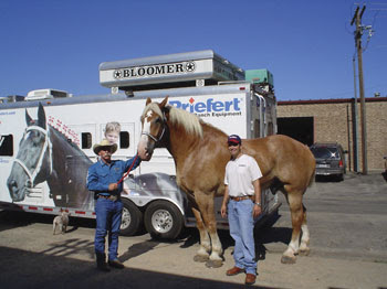 World Tallest & Smallest Horse