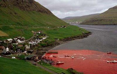 Merciless killing of Dolphins