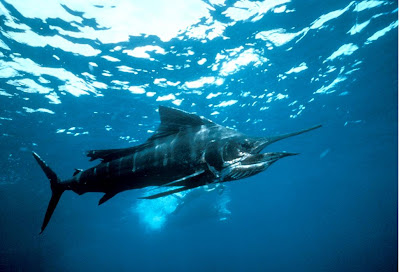 World Fastest Fish