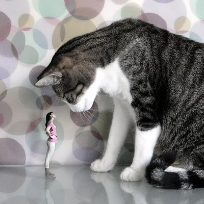 big cat photo manipulation