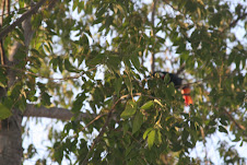 Aves nativas de Palmas