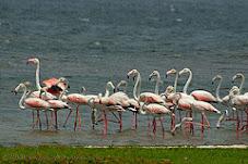 Bundala Bird Sanctuary, Sri Lanka