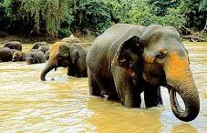 Ancient Bullog & Bulldozer of Sri Lanka