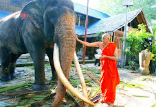 Buddhist Monk blessing the resident  elephant of the temple